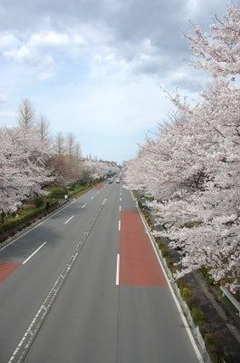 桜とインテリア