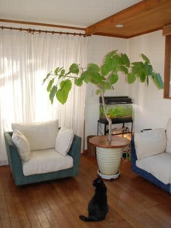 クラシノート-植物とお花のある暮らしー 【東京都・Kikiさま】