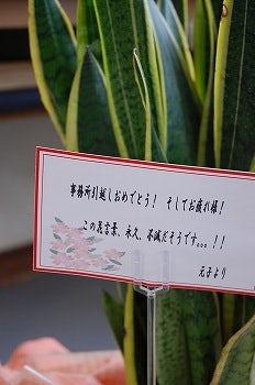 嬉しい花言葉